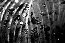"Olivier Khorasani, Silver Key in Photography ""Leaf"""